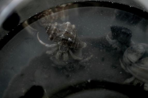 crabs1 - bandw ish