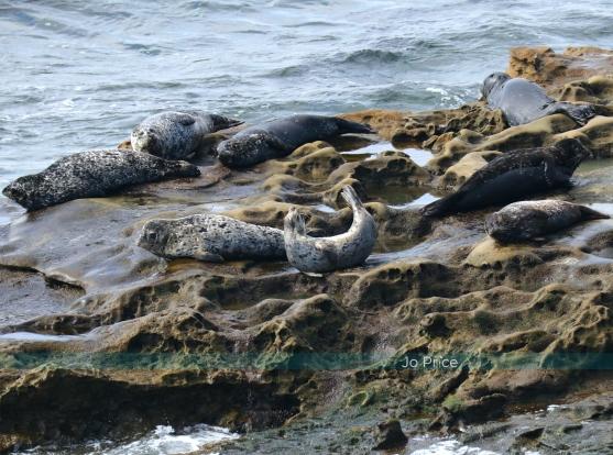 seal dancing1 - IG